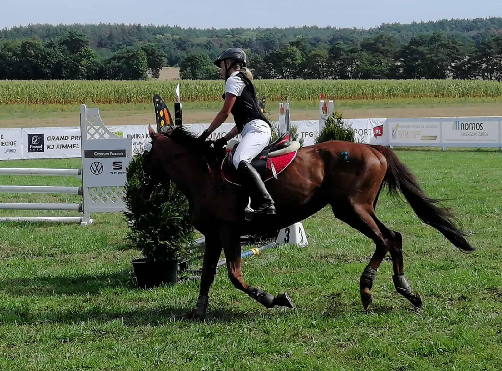 konie szreniawa